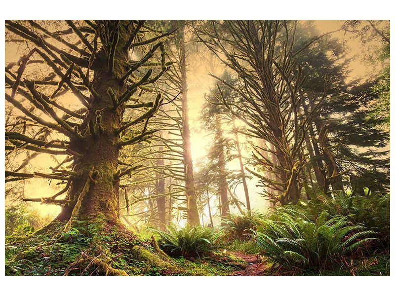 Klebeposter Sonnenuntergang im Dschungel
