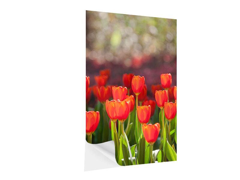 Klebeposter Das rote Tulpenbeet