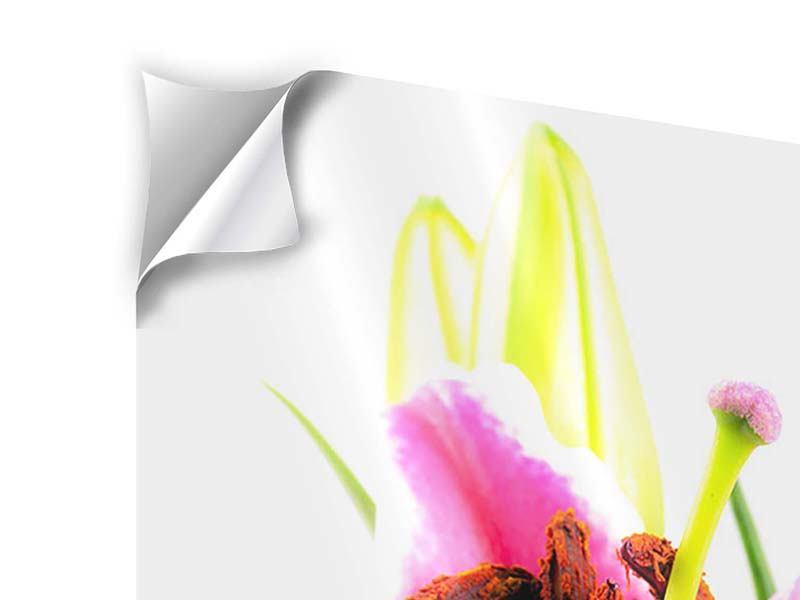 Klebeposter Makro-Lilie