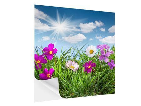 Klebeposter Blumenwiese