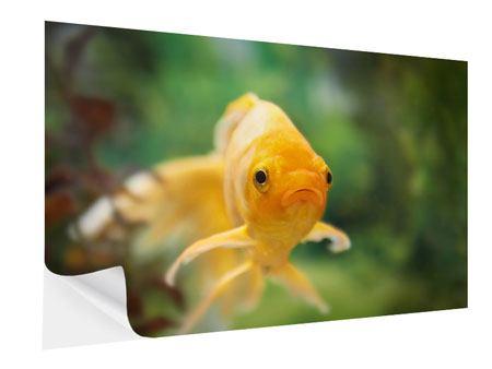 Klebeposter Der Fisch