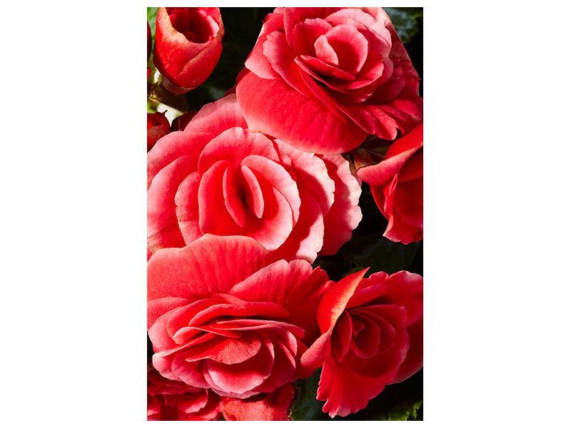 Klebeposter Rote Rosen