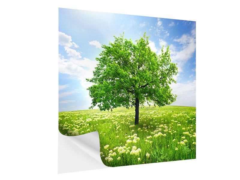 Klebeposter Der Baum