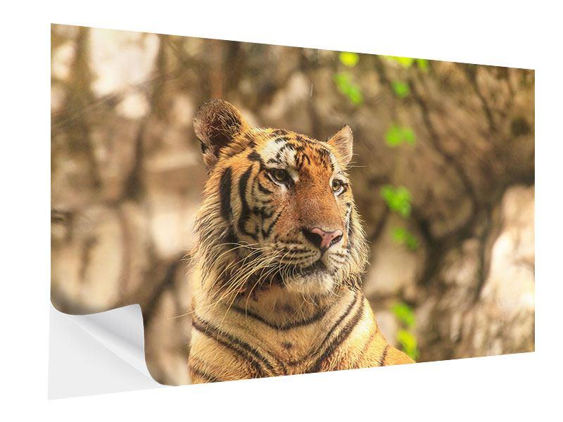 Klebeposter Tiger