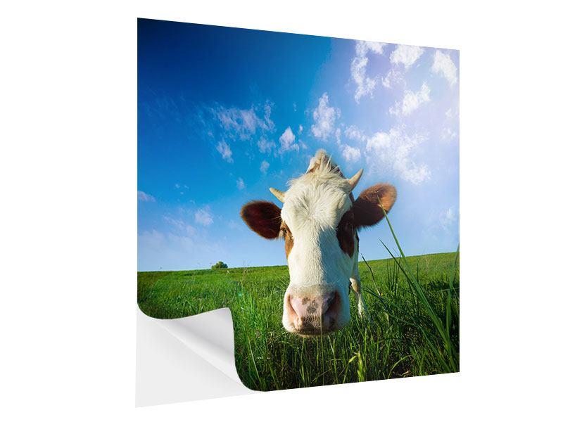 Klebeposter Die Kuh