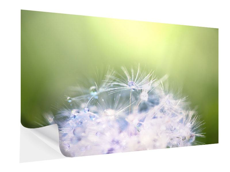 Klebeposter Pusteblume XL im Morgentau