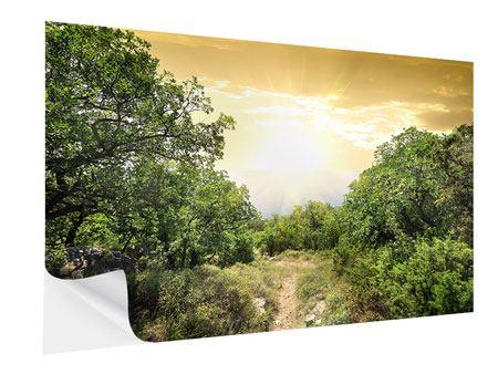 Klebeposter Am Ende des Waldes