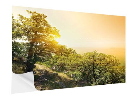 Klebeposter Sonnenuntergang in der Natur