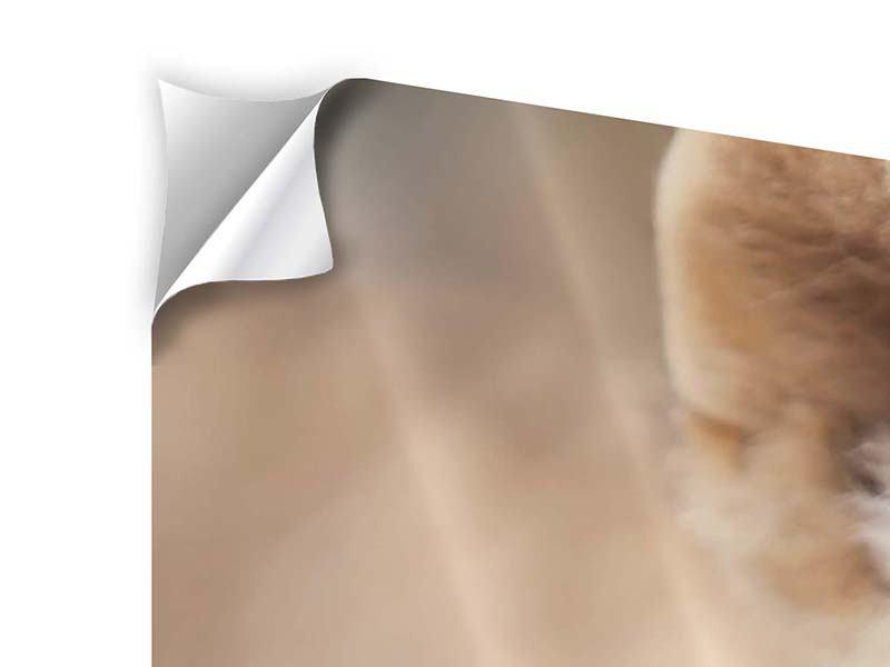 Klebeposter Löwenbaby