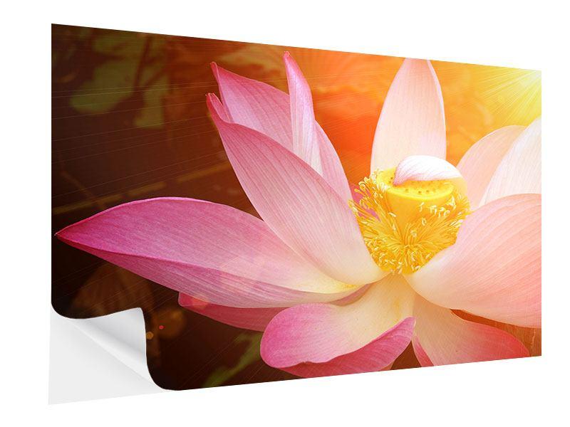 Klebeposter Close Up Lotus