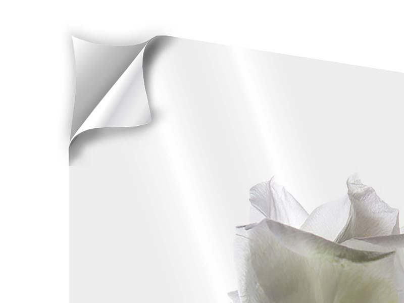 Klebeposter Im Namen der Rose