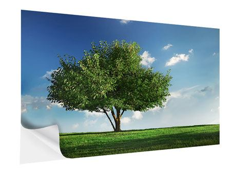 Klebeposter Baum im Grün
