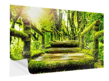 Self-Adhesive Poster Moss