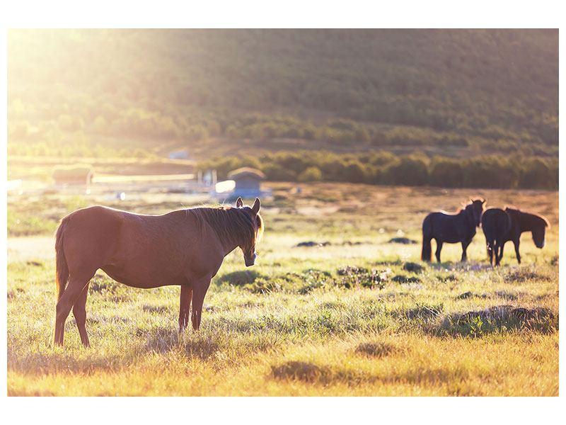 Klebeposter Wilde Pferde