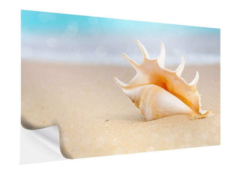 Klebeposter Die Muschel am Strand