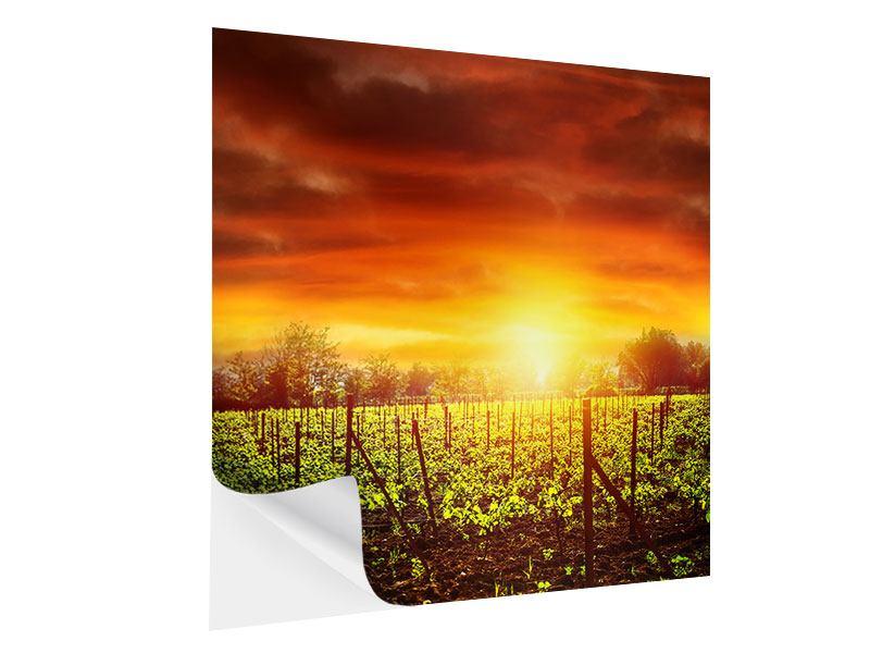 Klebeposter Der Weinberg bei Sonnenuntergang
