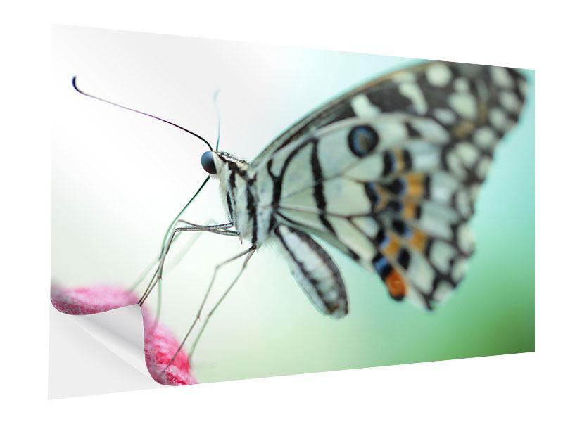 Klebeposter Schmetterling XXL