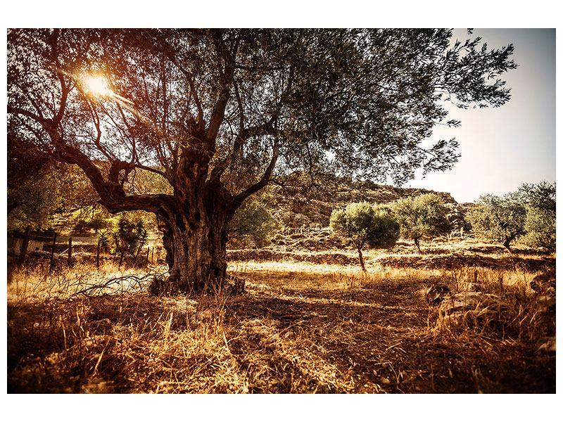 Klebeposter Olivenhain