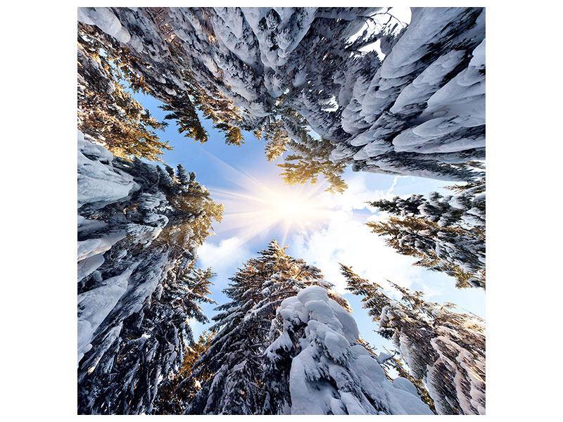 Klebeposter Verschneite Tannenspitzen in der Sonne