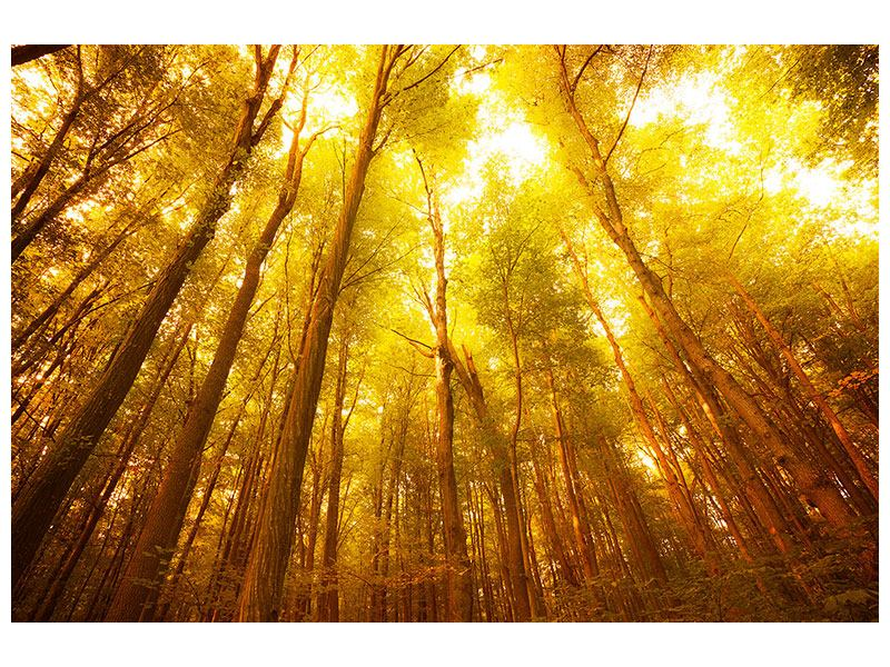 Klebeposter Herbstwald