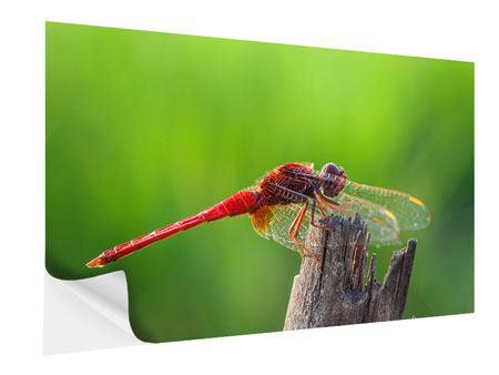 Klebeposter Libelle XXL
