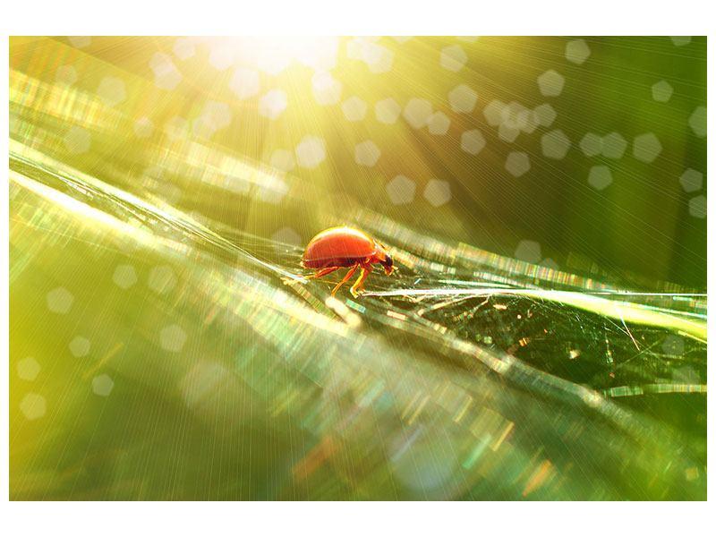 Klebeposter Marienkäfer im Sonnenlicht
