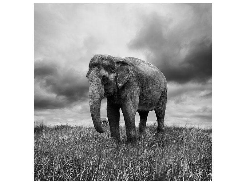Klebeposter Elefant