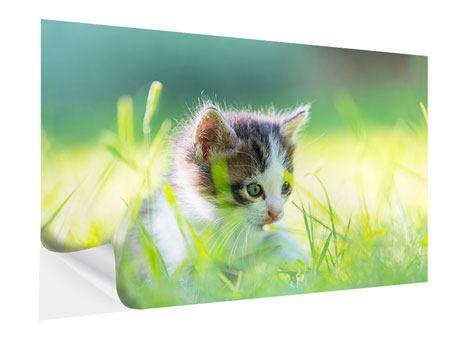 Klebeposter Kitten