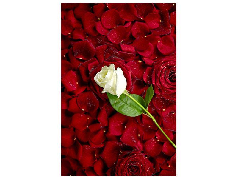 Klebeposter Auf Rosen gebettet