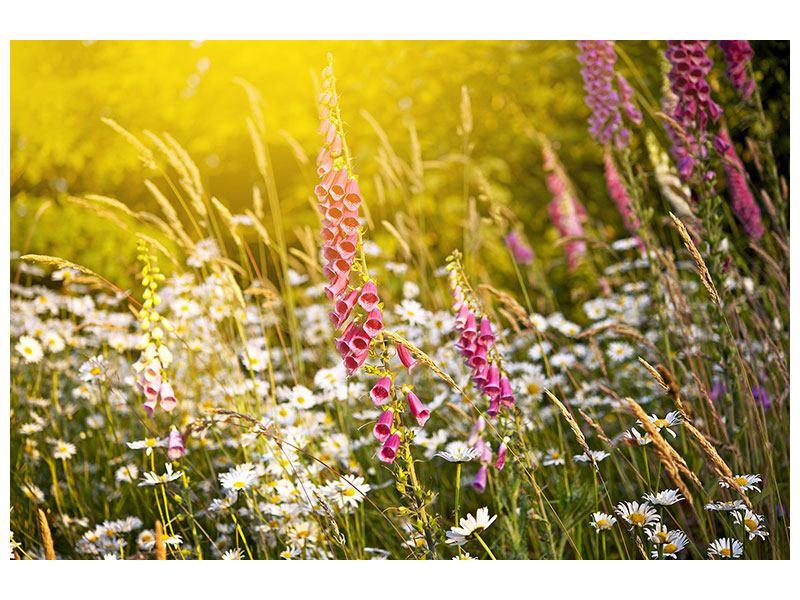Klebeposter Sommerliche Blumenwiese
