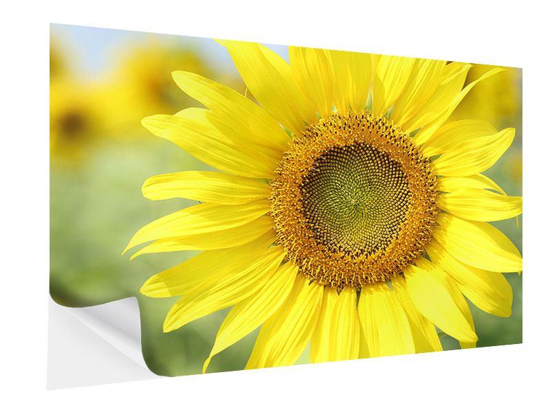 Klebeposter Die Blume der Sonne