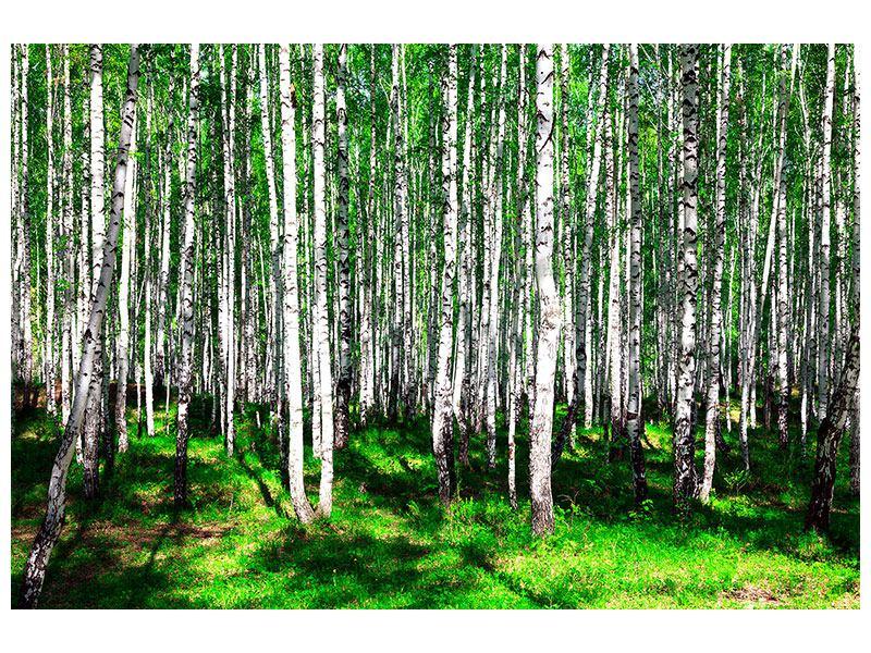 Klebeposter Sommerlicher Birkenwald