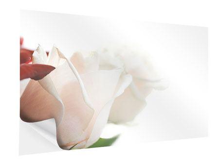 Klebeposter Herrliche Rosen