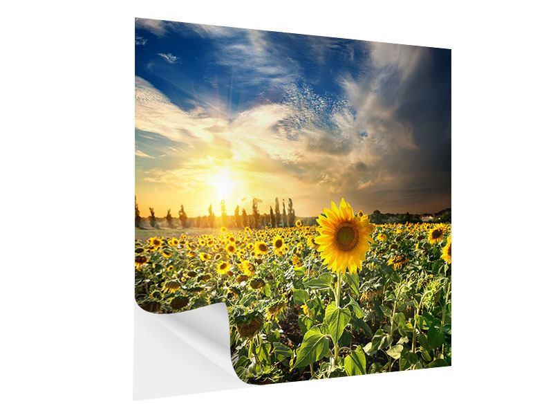 Klebeposter Sunny Flowers
