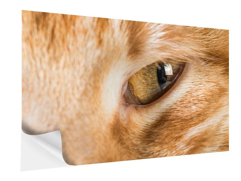 Klebeposter Close Up Katze
