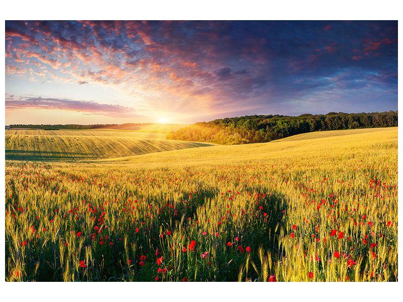 Klebeposter Ein Blumenfeld bei Sonnenaufgang