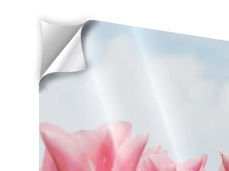 Klebeposter Zarte Tulpen