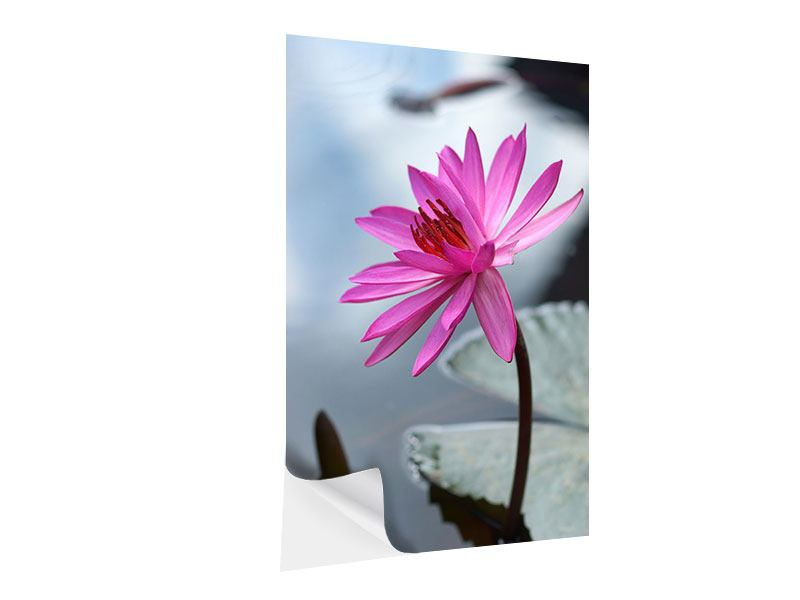 Klebeposter Grosse Lotus in Pink