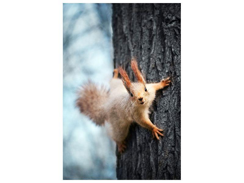Klebeposter Das Eichhörnchen