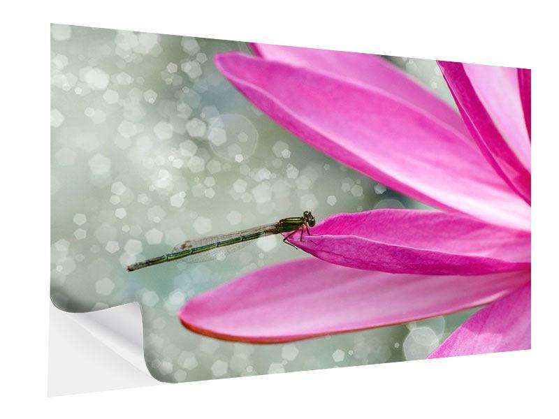 Klebeposter Libelle auf dem Seerosenblatt