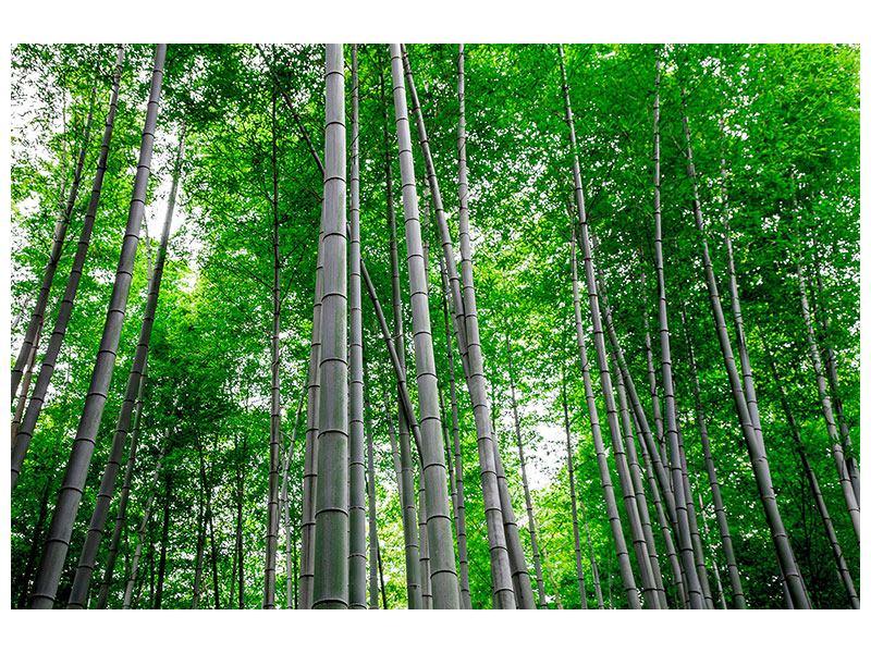 Klebeposter Bambuswald