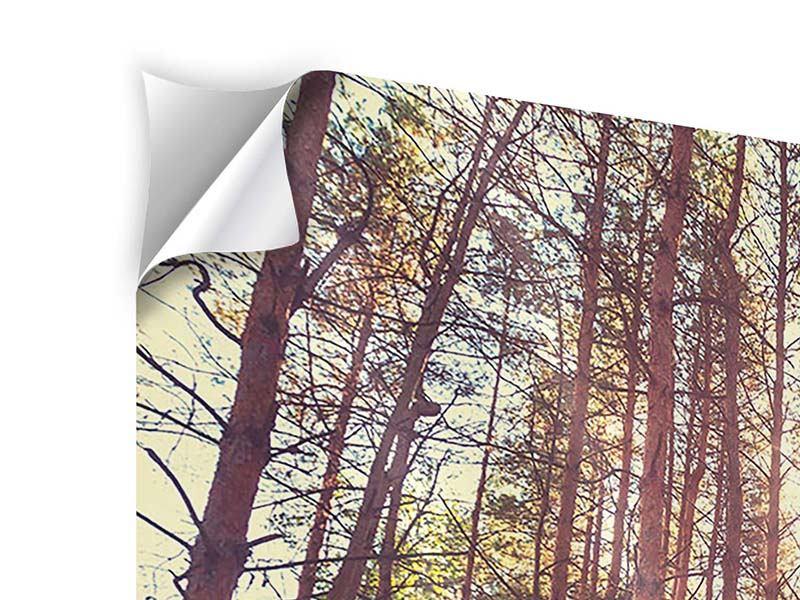 Klebeposter Licht am Ende des Waldweges