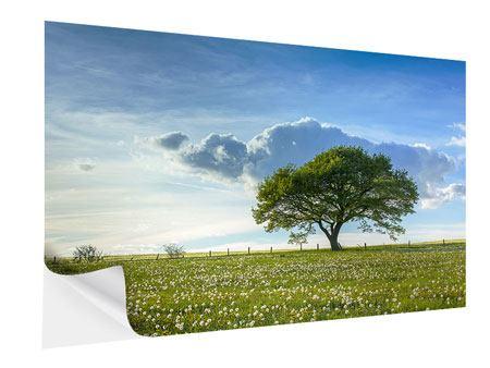 Klebeposter Frühlingsbaum