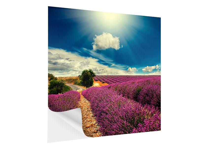 Klebeposter Das Lavendeltal