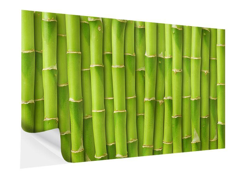 Klebeposter Bambuswand