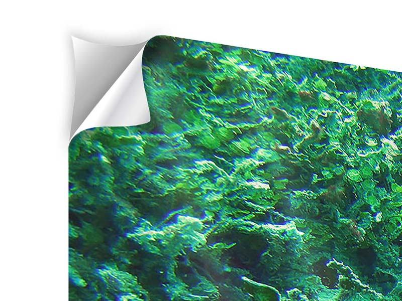 Klebeposter 5-teilig Korallen