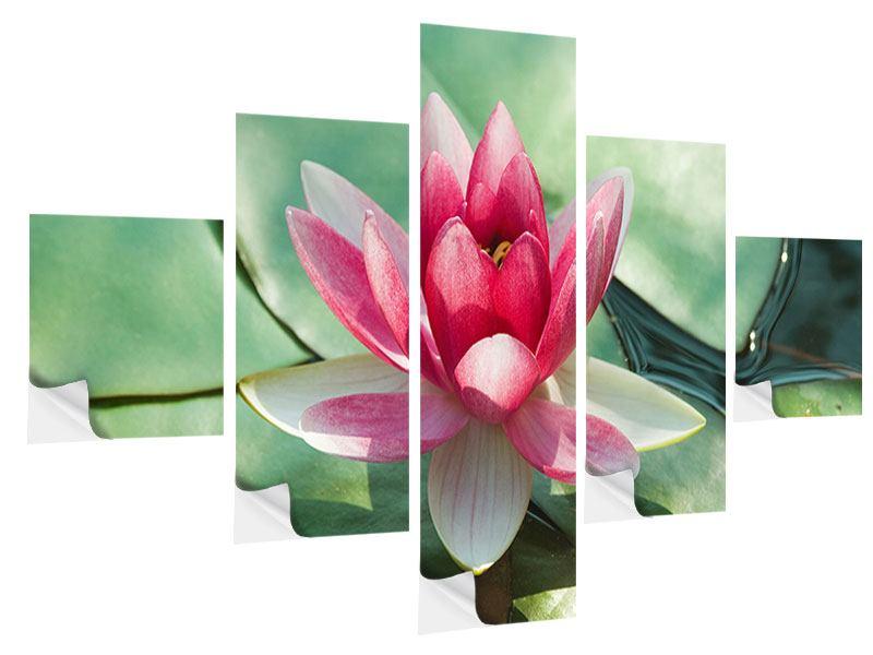 Klebeposter 5-teilig Der Frosch und das Lotusblatt