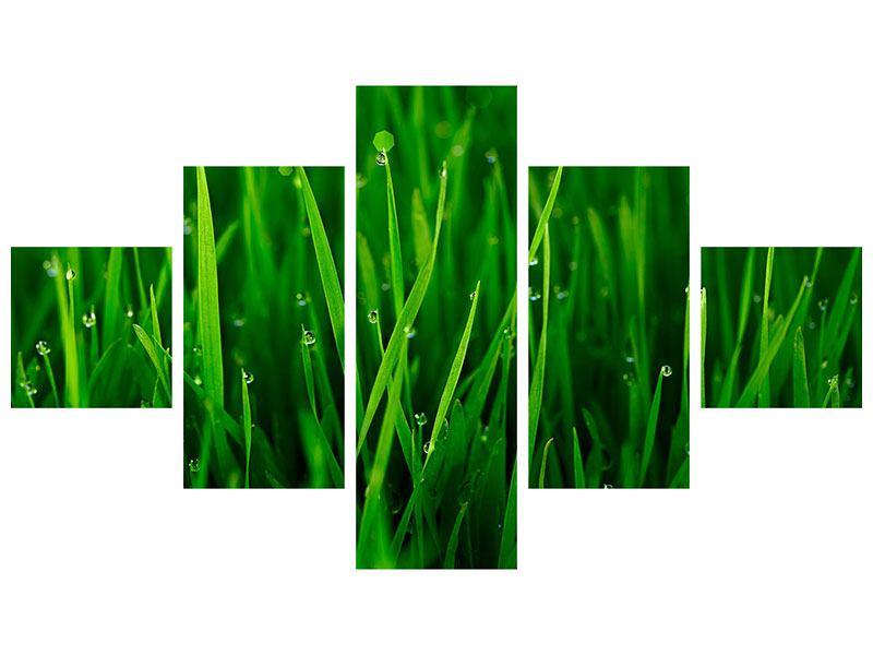 Klebeposter 5-teilig Gras mit Morgentau