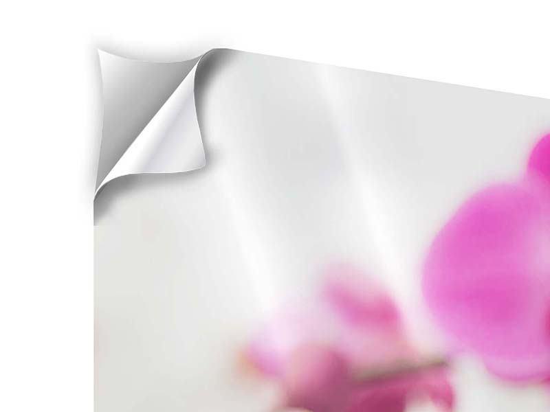 Klebeposter 5-teilig Das Symbol der Orchidee
