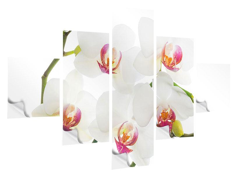Klebeposter 5-teilig Orchideenliebe